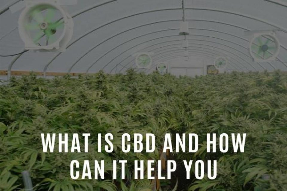What Is CBD and How To Use It