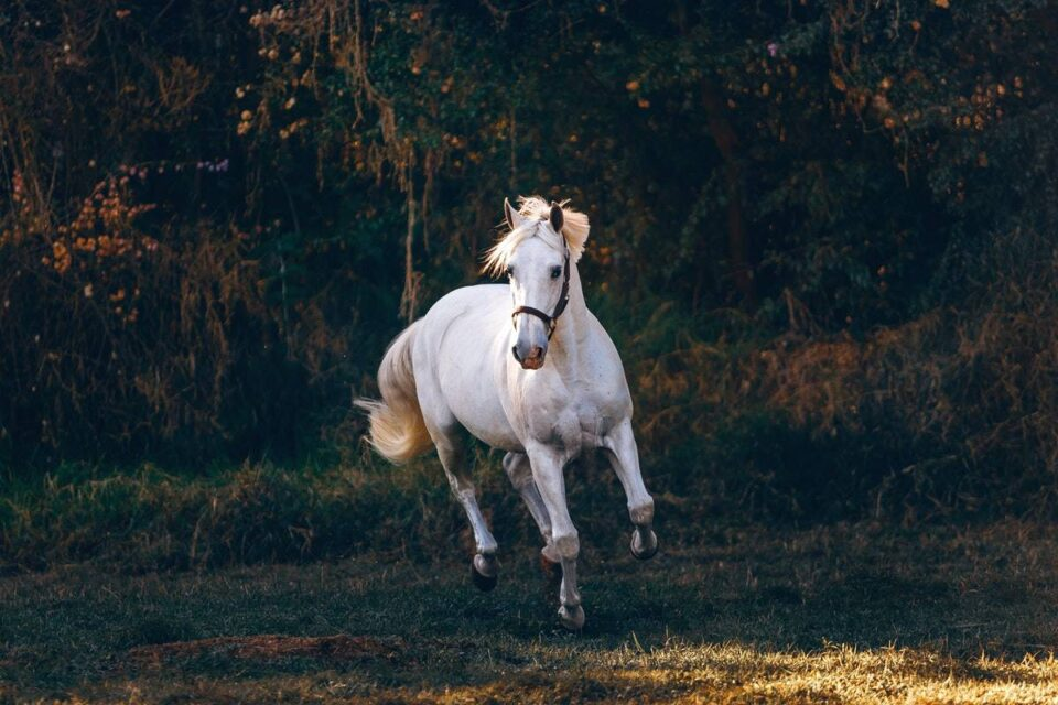 What Are The Best Home Remedies For Horses