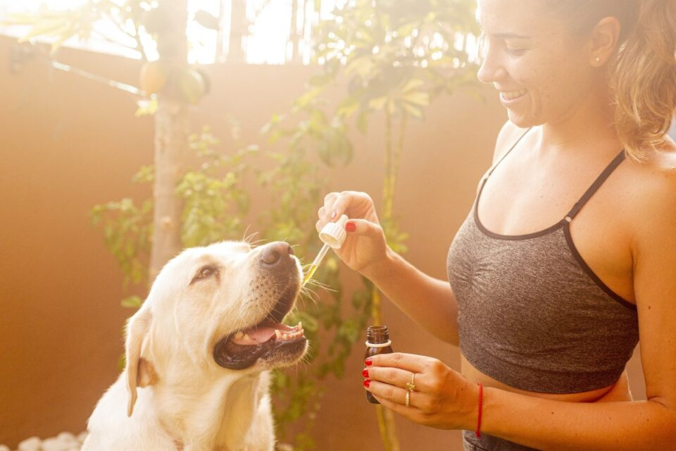 Top Calming and Relaxing Aids for Canine Pets